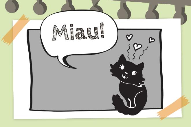 Beitragsbild Katze