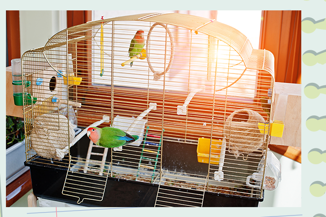 alles ber wellensittiche die bloggerbande. Black Bedroom Furniture Sets. Home Design Ideas