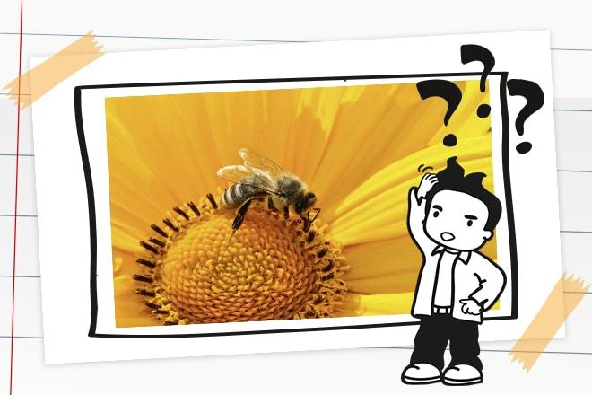 Wozu brauchen wir Bienen?