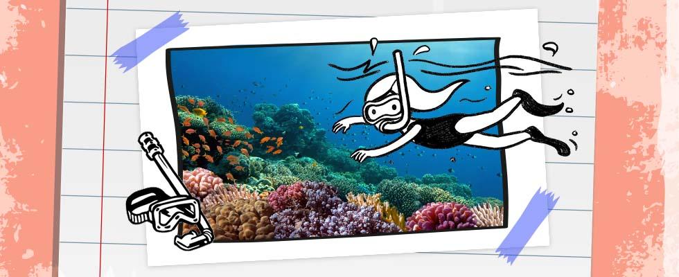 Wie schützt man ein Korallenriff?